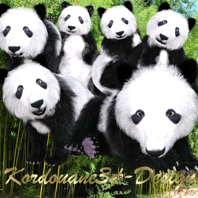Grand panda (tube-animal-gratuit-free)