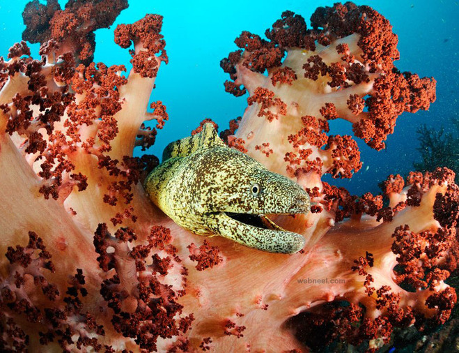 underwater photography moray eel japan