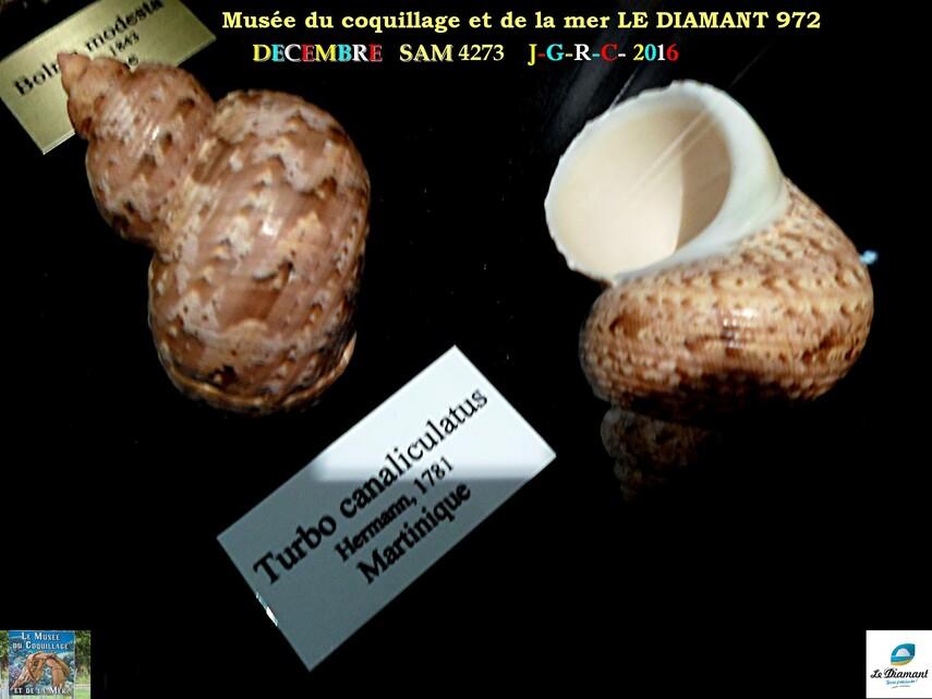 Le monde des coquillages de mer   2/5  22/29    LE DIAMANT MARTINIQUE       D    19/10/2018