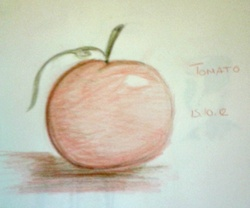 tomato pomme-citrouille