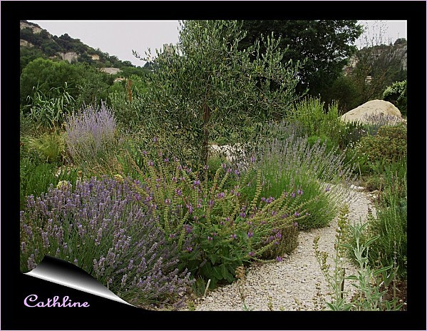 jardin-Dany---4-juillet-2011.jpg