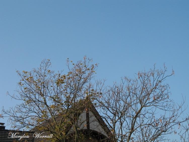 Ciel d'Alsace 238