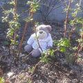 Scoubidou se cache dans les framboisiers... Je l'ai trouvé assez facilement...
