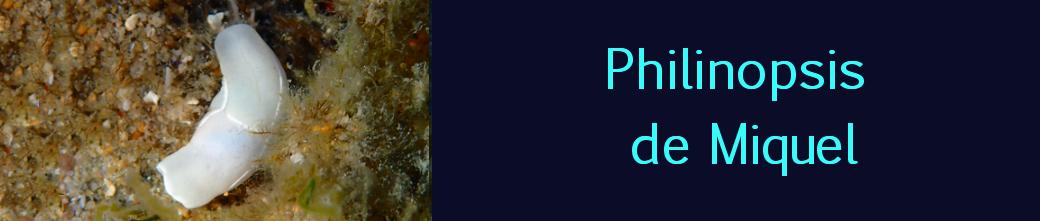 philinopsis de miquel