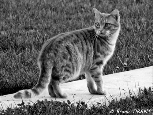 Portraisiste pour chat