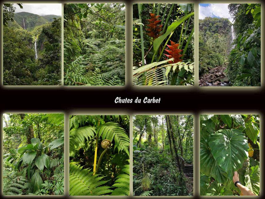 « La Guadeloupe –L'Île papillon 2 »