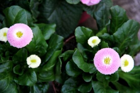 Quelques emplettes chez Famiflora