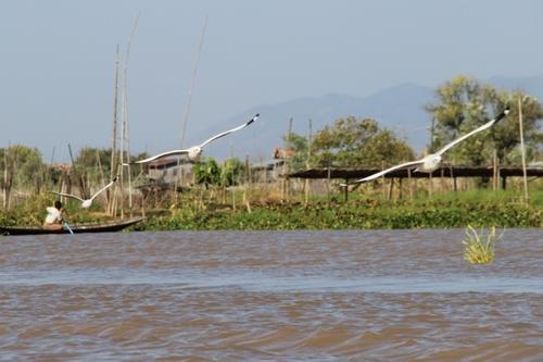 Aniamux en Birmanie