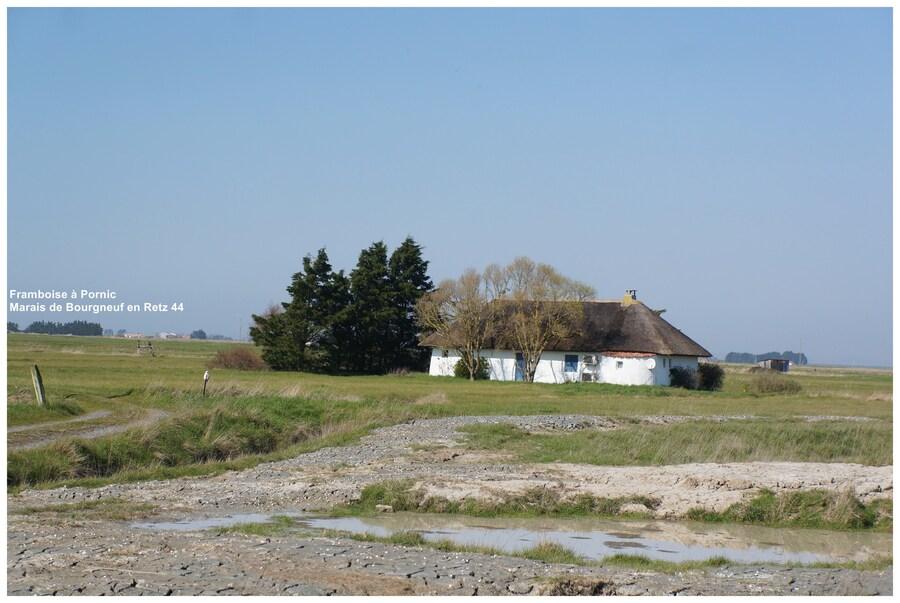 Dans le marais de Bourgneuf en Retz 44
