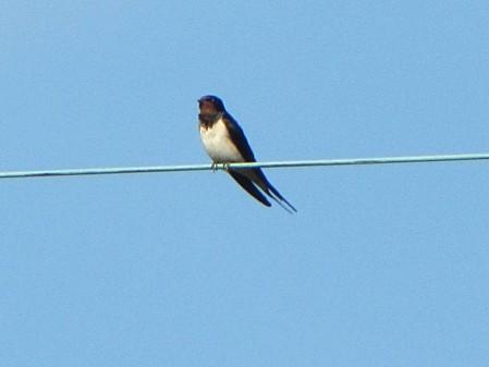 les-oiseaux-et-autres-volatiles 0674