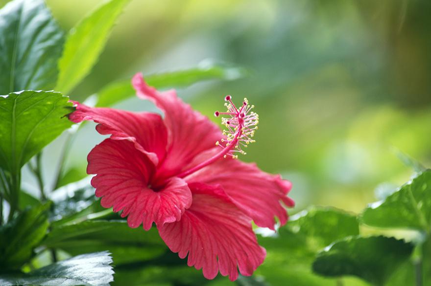 19/8/21 : Les fleurs comestibles tropicales et d'ailleurs (DIVERS)