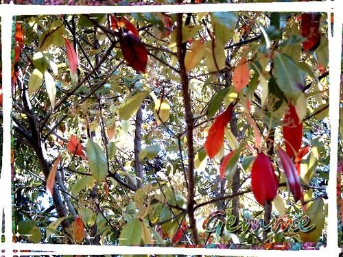 Feuilles de couleur, Parc Chabrières, Oullins (69)