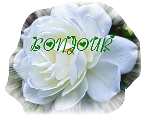 BONJ-BLANCVERT.png