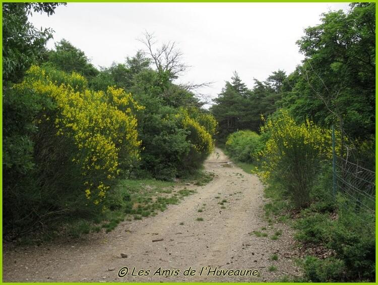 En juin, la balade vers la glacière Pivaut et la forêt de Mazaugues