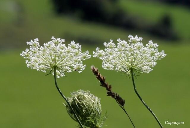 fleurs-sauvages 2836