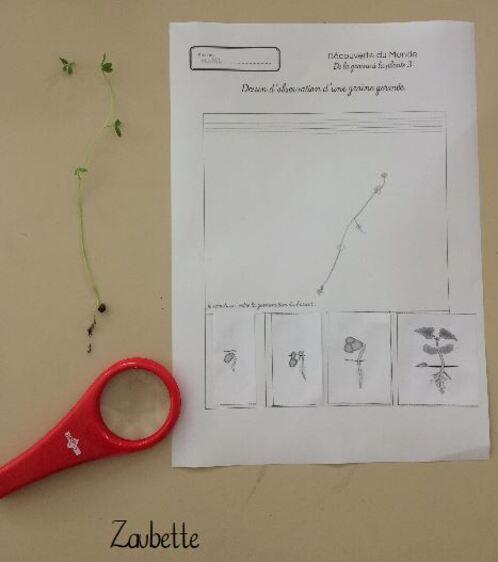 Testé en classe : le kit-plantes Pandacraft