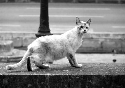 04 - Des chats du monde