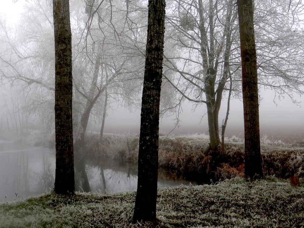brouillard  et givre qui parent les arbres comme des sapins de Noêl