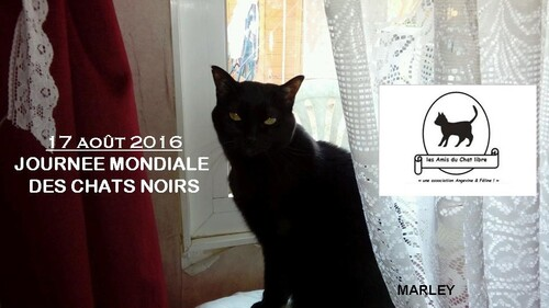 JOURNEE INTERNATIONALE DU CHAT NOIR
