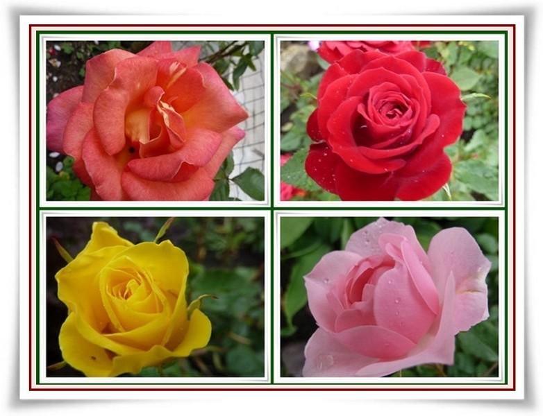 eau de roses