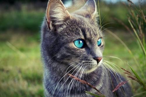 Le chat ne nous appartient pas...