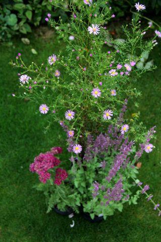 Les Jardins d'Aywiers - Automne 2016 - Mes achats