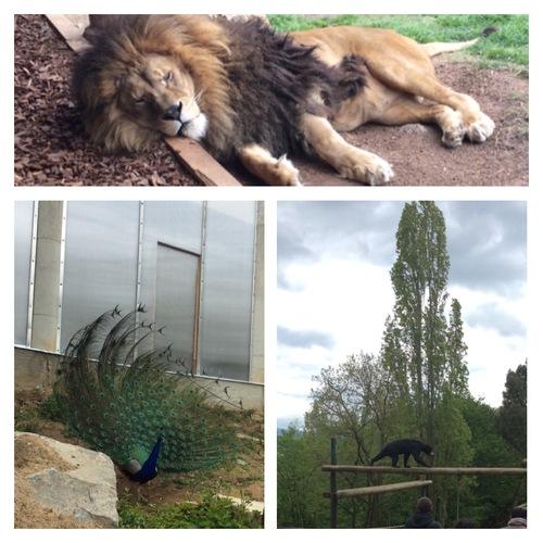 Sortie au zoo