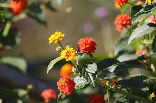 plantes suite