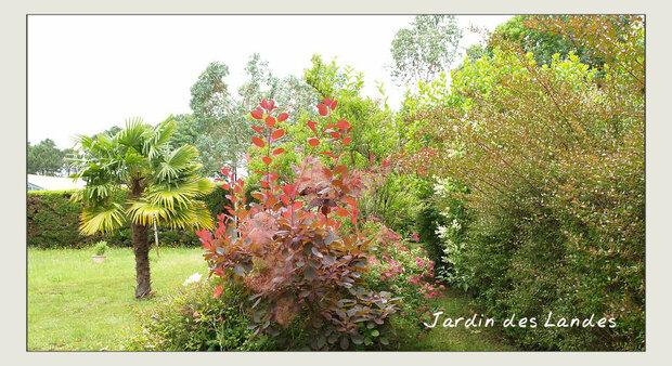 jardin fin juin 2018