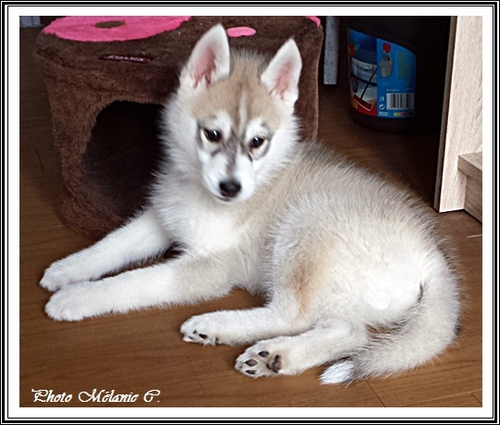 Keyko (2,5 mois)