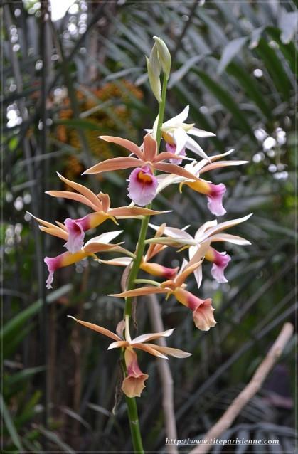 Orchidées Jardin des Plantes 1
