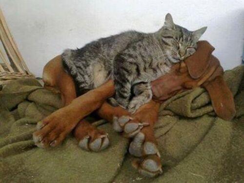 Les animaux tellement plus humains...