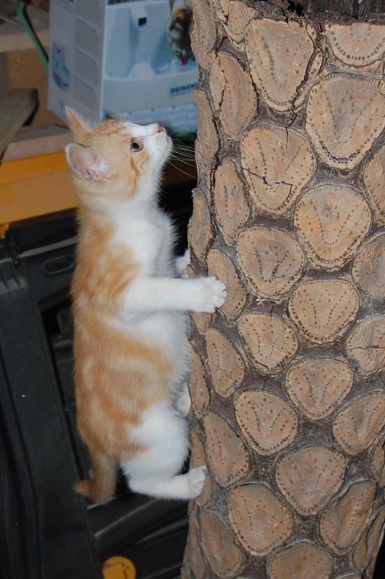chaton09juilletf
