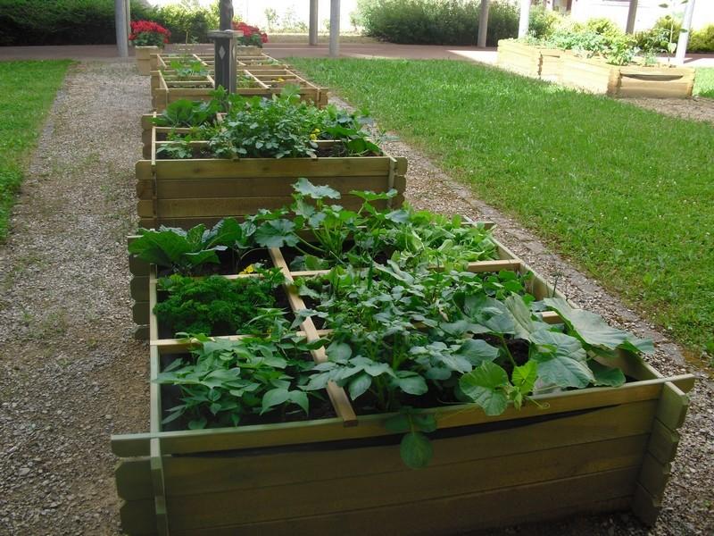 radis jardin ulis segpa lutterbach