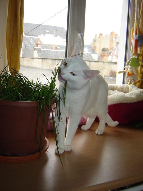 J'ai les pattounettes dans l'herbe !!!