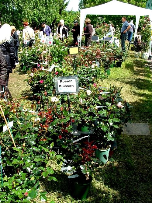 Saint Yrieix sous Aixe (87) : c'était ce dimanche la 14ème édition de la Fête de la Rose. Diaporama 2/3