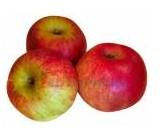 Capture belle de pontoise pomme