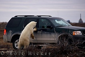 polar-bear-tourists 29050