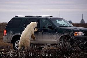 polar-bear-tourists 29050