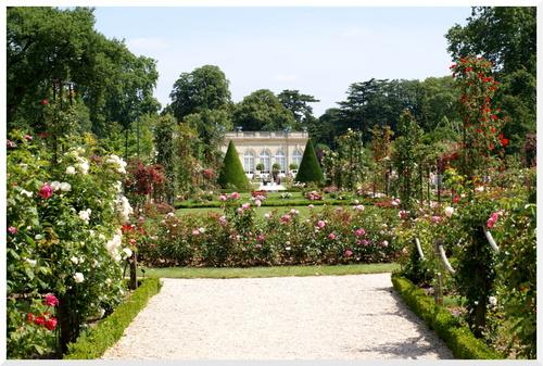 La Roseraie du Parc Bagatelle