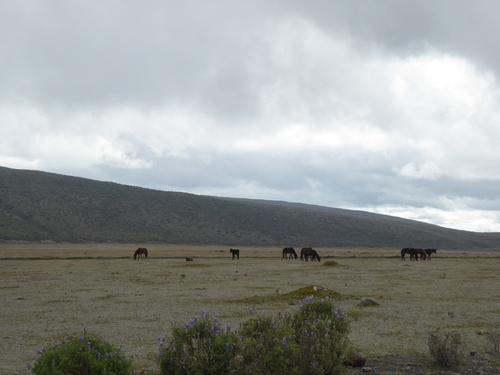 7 ème jour, Volcan Cotopaxi (1)