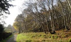 Accès au G.R via la Forêt de Beaumont