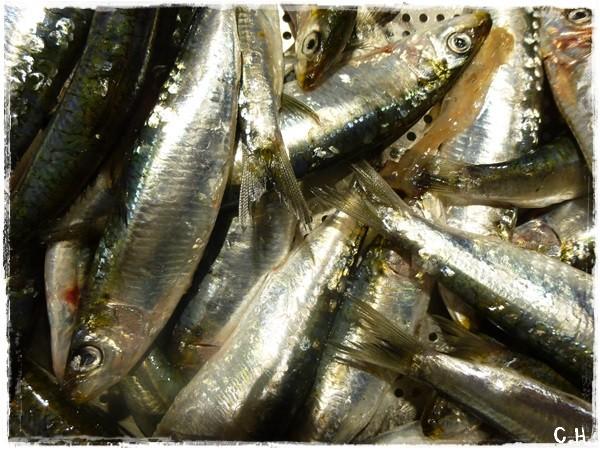 Recette Bretonne ; La soupe de sardines