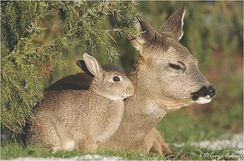 Bambi--Panpan--3-.jpg