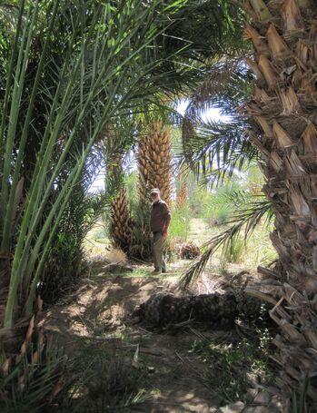 Depuis Essaouira le retour 2 ...