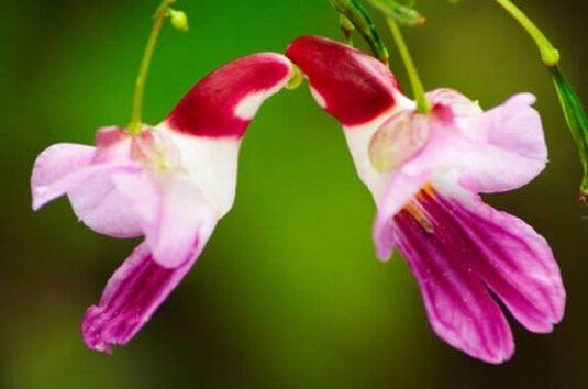 Autres orchidées rares