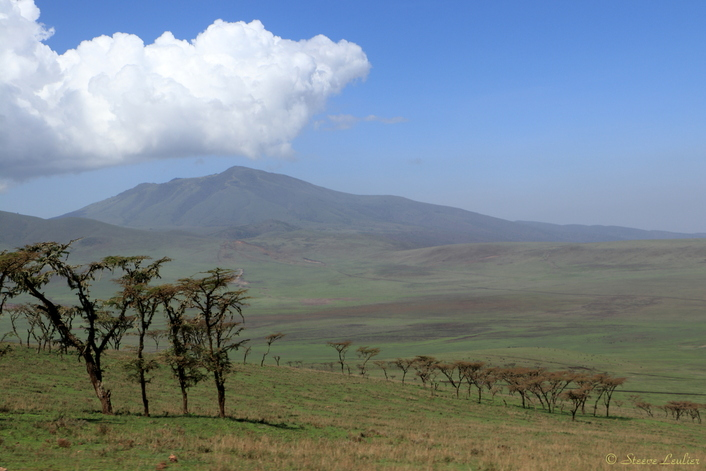 Zone de conservation de Ngorongoro
