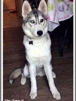 Leska (5 mois)