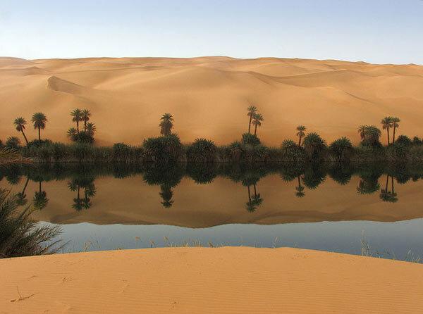 Oasis dans le sahara