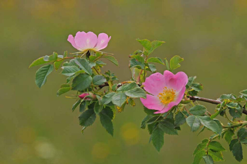 Fleurs-9 0872